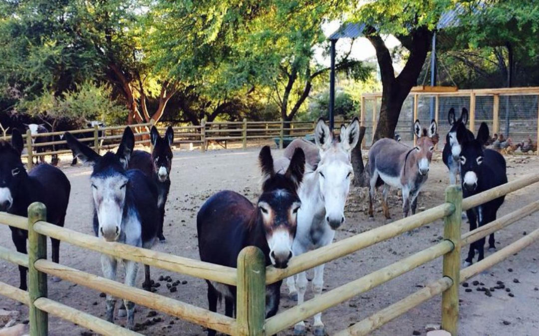 The Karoo Donkey Sanctuary